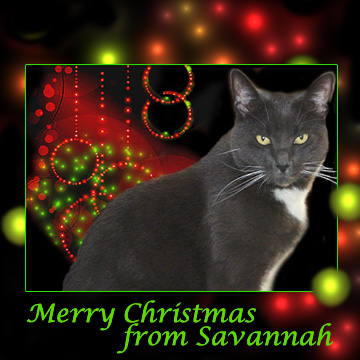 Christmas Ecard from Savannah
