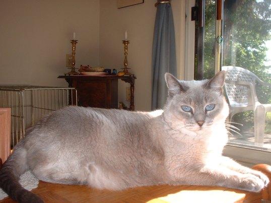 Nyla Coffeetable Cat