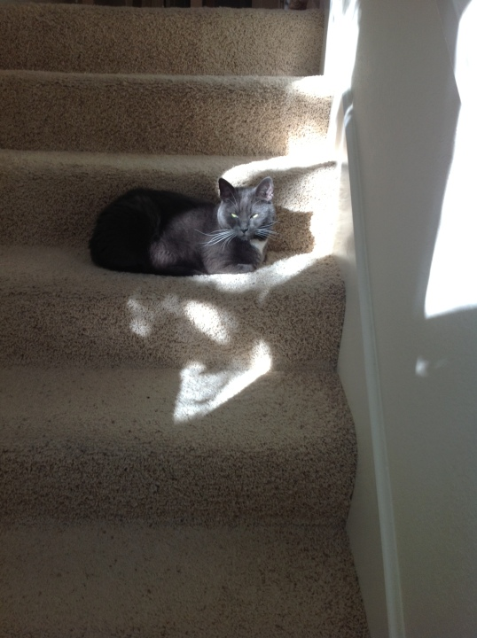 search for sun puddle 3
