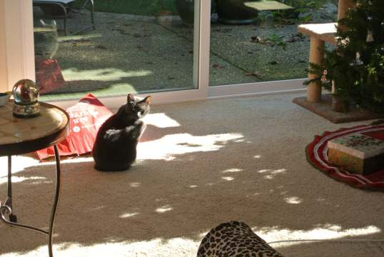 search for sun puddle 4