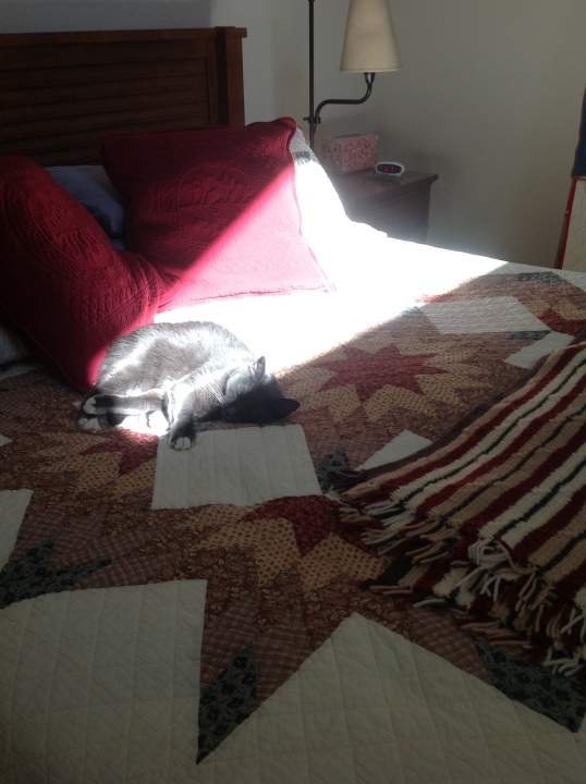 search for sun puddle 5