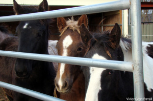 rescued foals