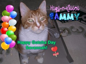 SavannahGotchaSmall