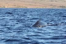 Whale Traffic