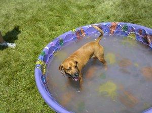 Murph in water tub