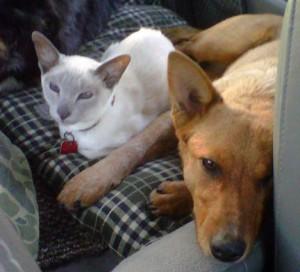 Nellie&Cinnamon