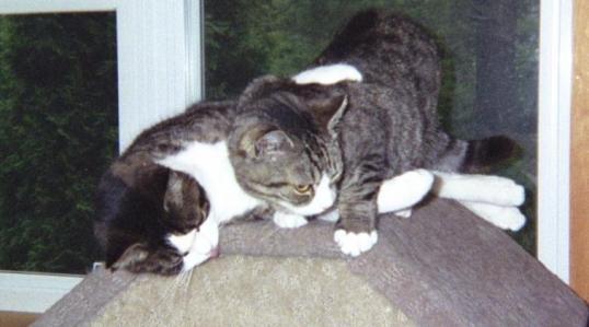 Tobias Snuggling with Nissy