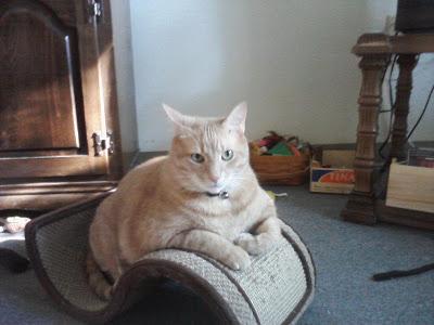Brutus Mancat