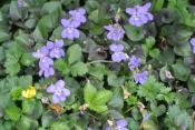 Ground flowers