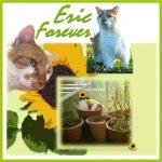 forever-eric