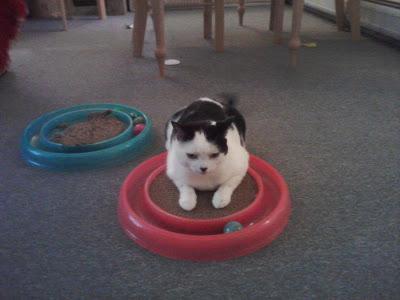 rescue cat Emily