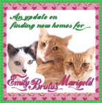 Update, Emily Brutus Marigold