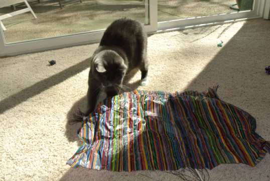 MEOWSIE!!! Sammy's Own Special Tissue Paper Collection