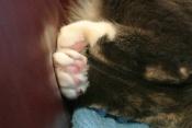 Mom luvluvluvs my pink paw pads