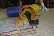 The Rat Pack! In My 3 Way Tunnel!