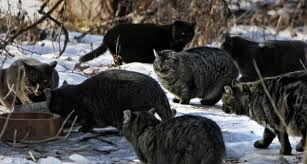 feral cats blog 4 tc