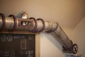 Special Indoor Cat Action