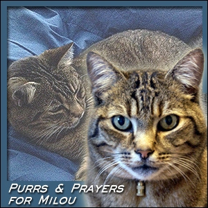 purrs-and-prayers-for-milou