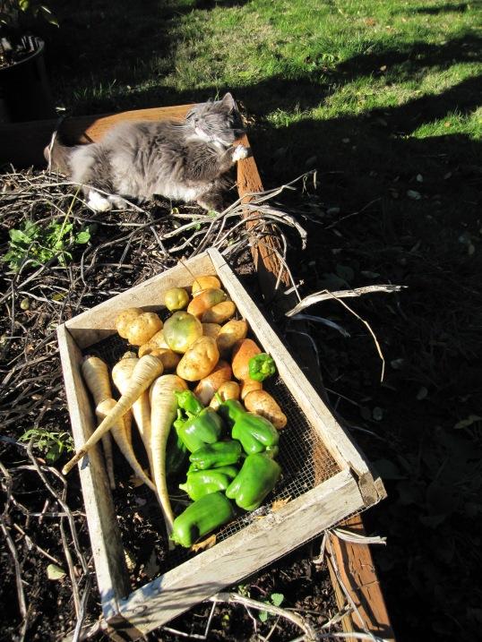 Veggies from my Labor