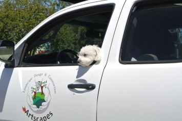 A happy woofie traveller