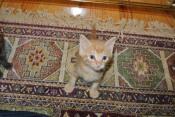 Squeee...a kitten