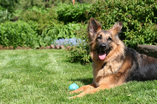 Grete 2013 with new ball