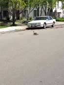 First look at 4 ducklings and Mom