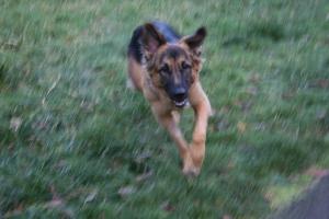November 27, 2008, Grete 004