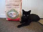 I love my Harrington's cat food