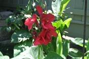 Red big flower???