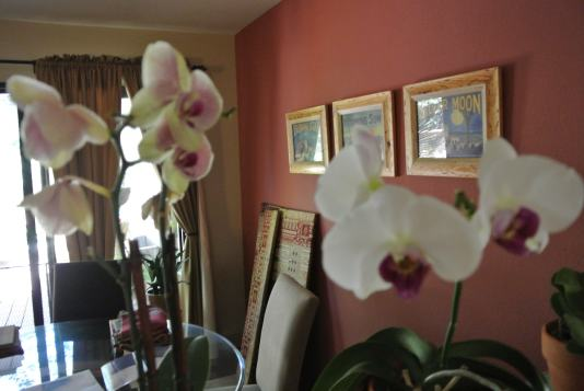 Orchids?? Nissy is gonna like this!