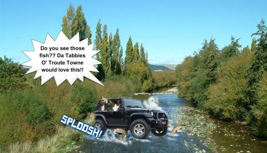 Jeep stream crossing fish