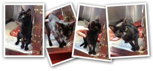 mary_kitten_needs_home
