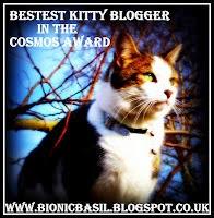 bestkittybloggerinthecosmosaward