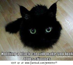 black cat weight control
