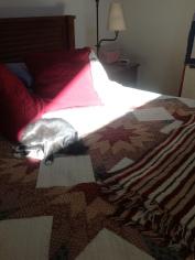 Sun spotlight just for me