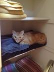 One of his safe places...linen closet