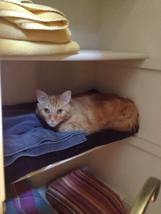 One of his safe places...linen closet