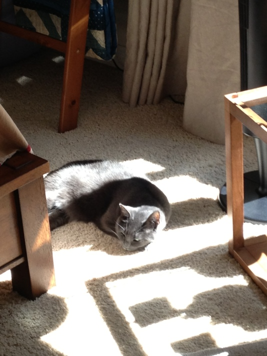 My newest sun puddle today