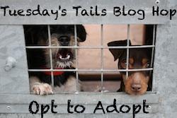 tuesday tails blog hop