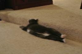Blurry...see my hind toesies??