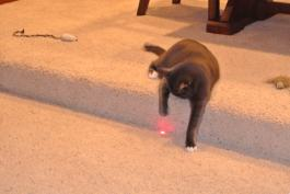 The Red Dot!!