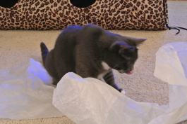 Tissue paper tastes good