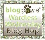 blog paws WW