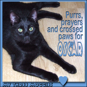 Purrs for Oscar