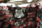 Sun puddles on my Niners blankie