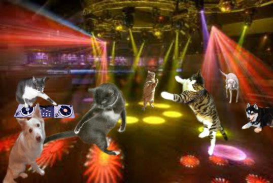 pawty dance floor