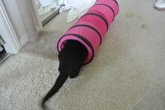 whew! I am so tired..I think I will hang out in the pink teleport tunnel