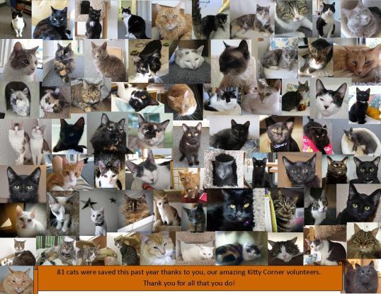 KC Anniversary cats 2013-2014