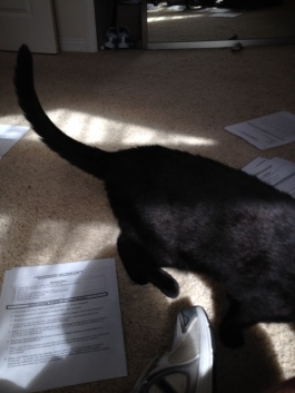 Snoopervising paperwork before the bizness trip